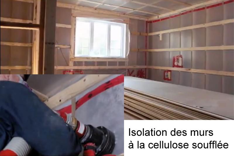 1cellulose_murs