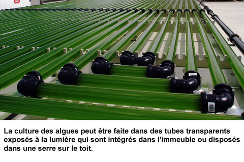 tubes production microalgues