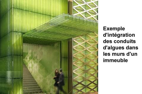 integration architecture microalgues