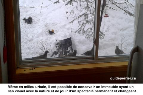 fenetre oiseaux